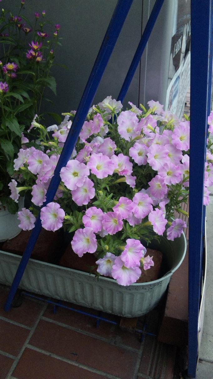 Flowers_20110508