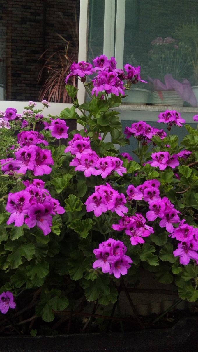 Flowers_20110510