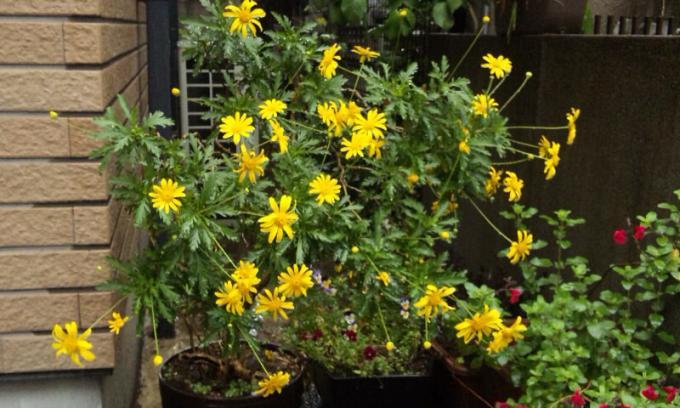 Flowers_20110511