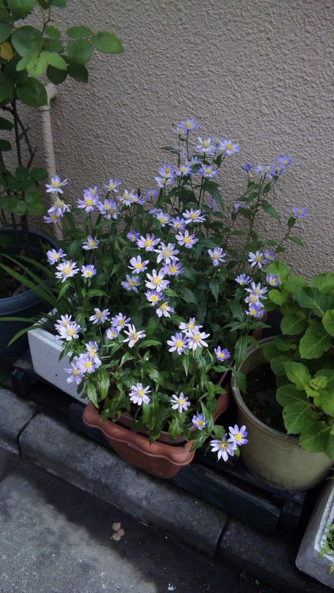 Flowers_20110514
