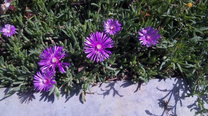Flowers_20110515