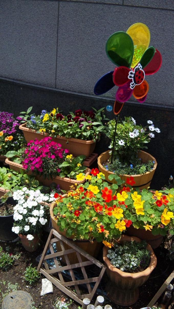 Flowers_20110517