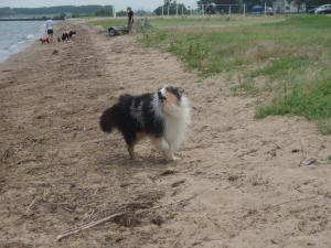 皆、犬は陸地を走るもんだぜ!