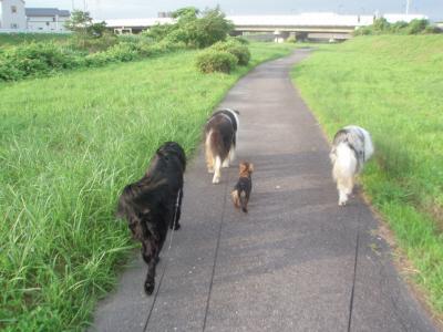 4頭仲良く散歩中。