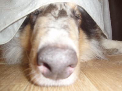 ゼロの寝顔