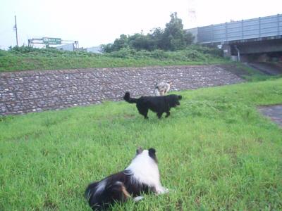 朝の散歩風景より・3