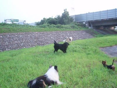 朝の散歩風景より・4