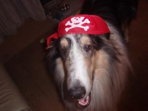 海賊キャップ。何でも似合うホーク!