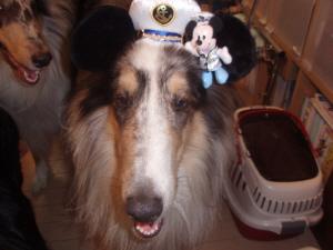 ミッキーの船長!お気に入りなんです。