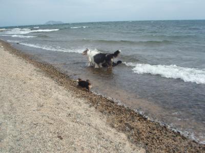 水辺を散策。