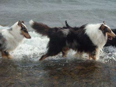 溺れそうになって、フラッドに文句を垂れるホーク!