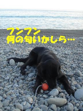 20070112085202.jpg