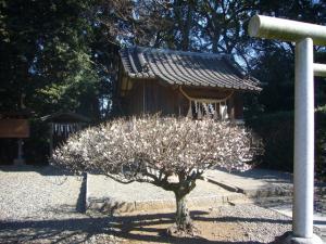 姉崎神社(2011年1月25日)2