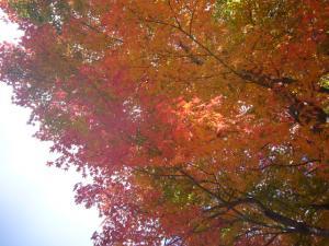 榛名神社(2011年11月12日)1