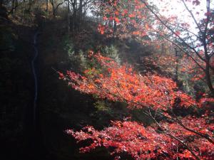 榛名神社(2011年11月12日)7