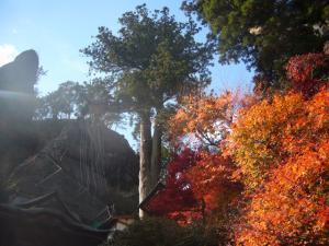榛名神社(2011年11月12日)9