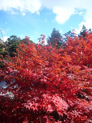 榛名神社(2011年11月12日)16