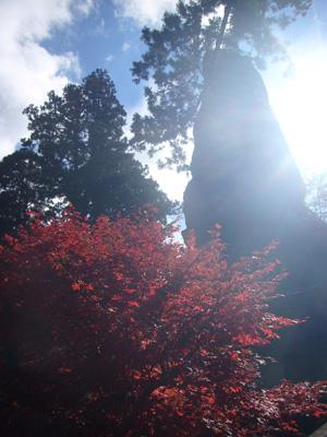 榛名神社(2011年11月12日)17