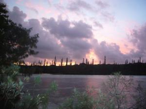 ニューカレドニア2日目(2011年11月22日)45