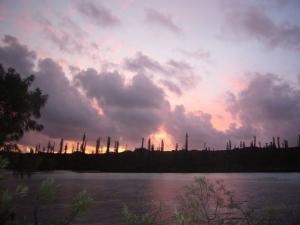 ニューカレドニア2日目(2011年11月22日)46