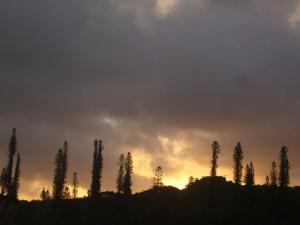 ニューカレドニア3日目(2011年11月23日)18