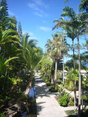 ニューカレドニア6日目(2011年11月26日)1