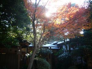 川越氷川神社 喜多院(2011年12月12日)7