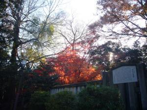 川越氷川神社 喜多院(2011年12月12日)13