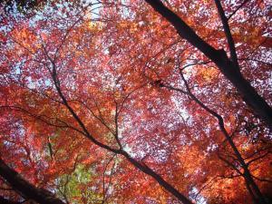 川越氷川神社 喜多院(2011年12月12日)14
