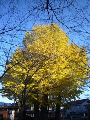 川越氷川神社 喜多院(2011年12月12日)18