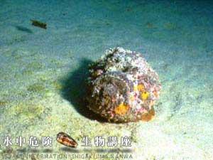 Stonefish2[1]