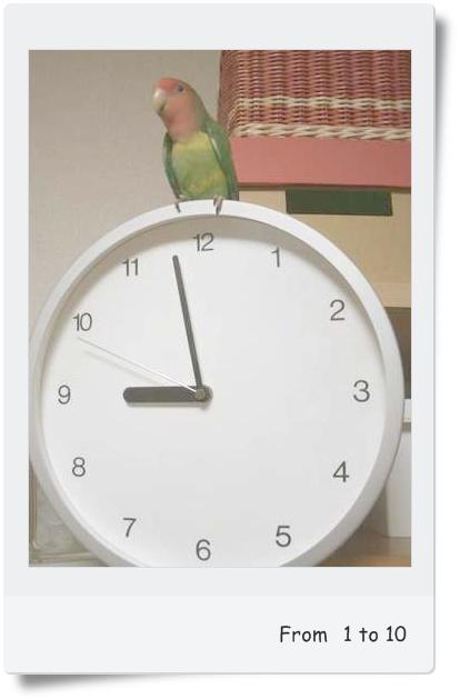 インコ時計