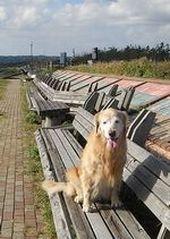 bench01.jpg