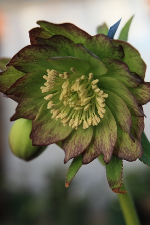dd green 222 2011