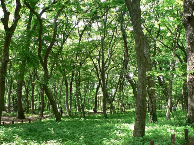 神代植物公園8