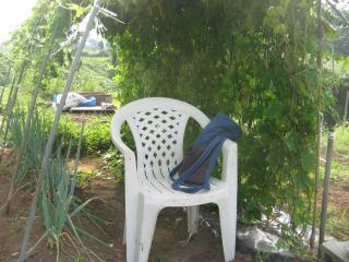 菜園の楽園