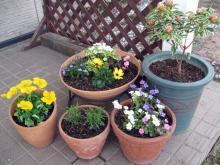 2011.05.08_プランターの花
