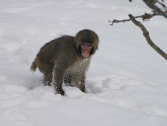 2012 0218 大雪