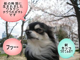 桜の時期に