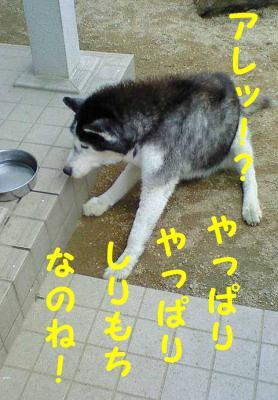 20070401121231.jpg