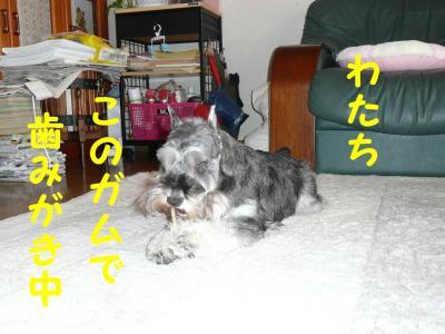 20070513202135.jpg