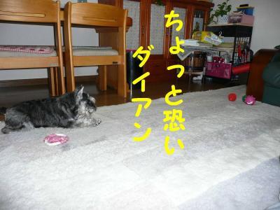 20070520211156.jpg