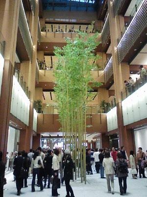 東京ミッドタウン - 竹