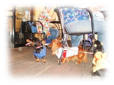 Dog Festa in お台場