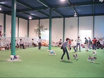 Dog space Punahele