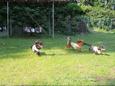 松本農園にて