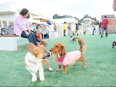 DOG GARDEN RESORT鶴ヶ島