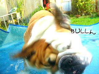 bull041.jpg