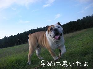 bull112.jpg