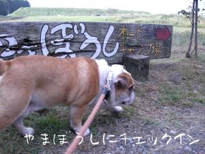 bull118.jpg